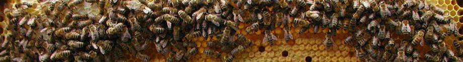 Die drei Bienenwesen