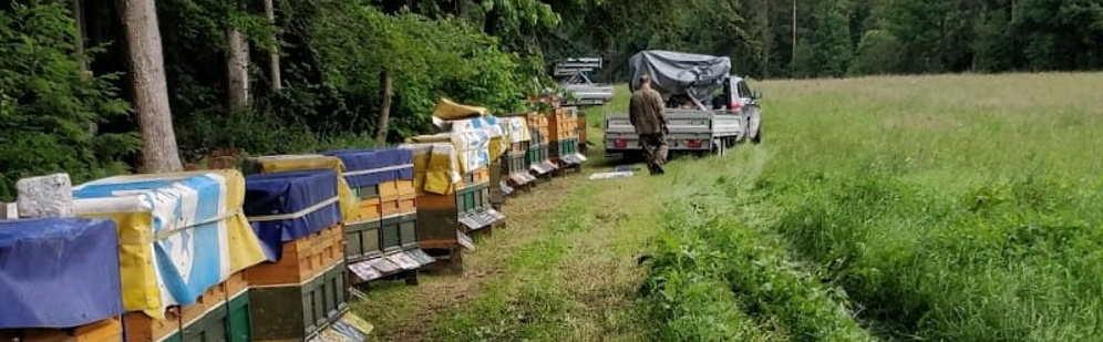 Mit Bienen Wandern
